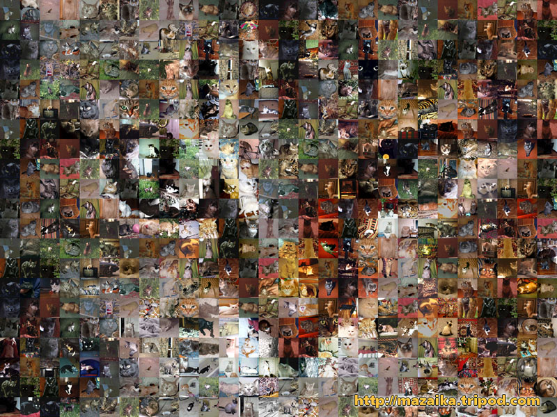 Mosaic Cat from many amatuer cat photos